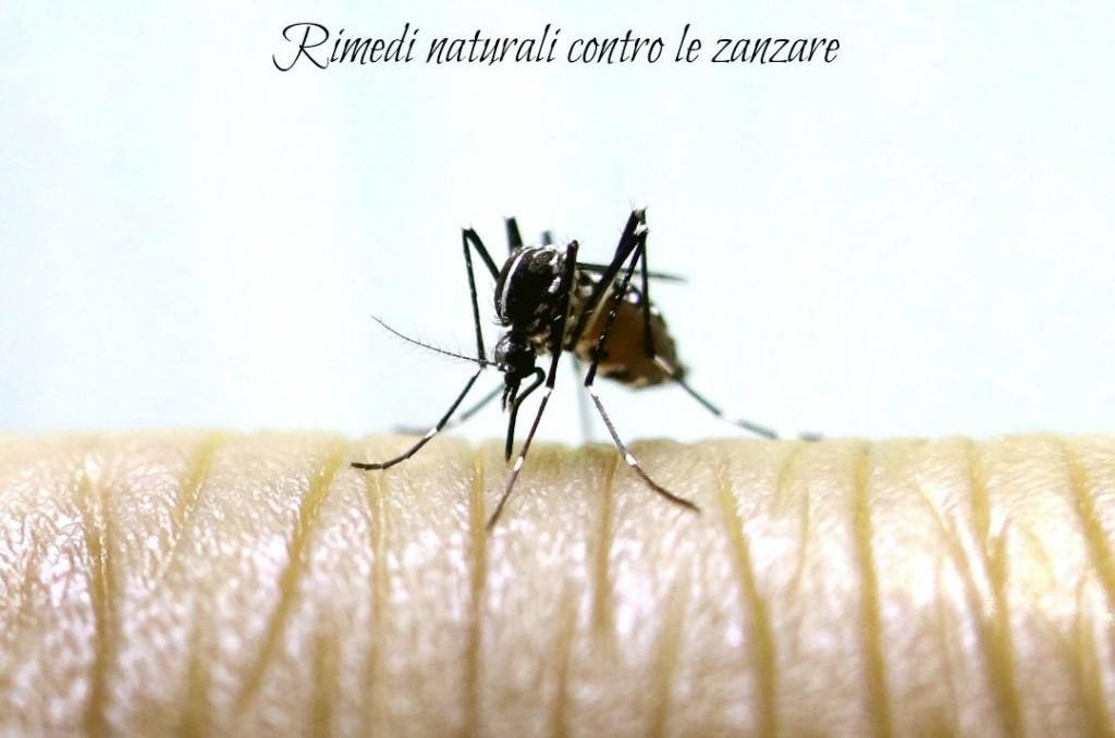 Rimedi naturali contro le zanzare