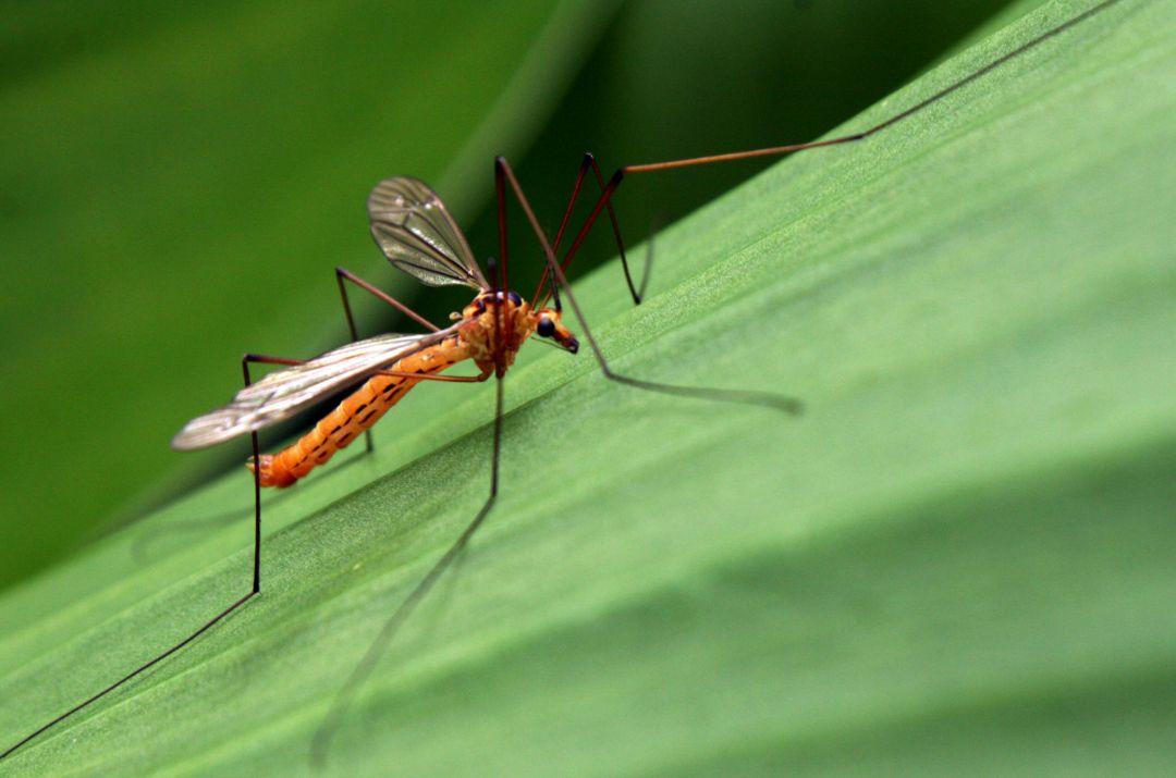 Rimedi naturali contro le zanzare efficaci - Rimedi contro le zanzare in giardino ...