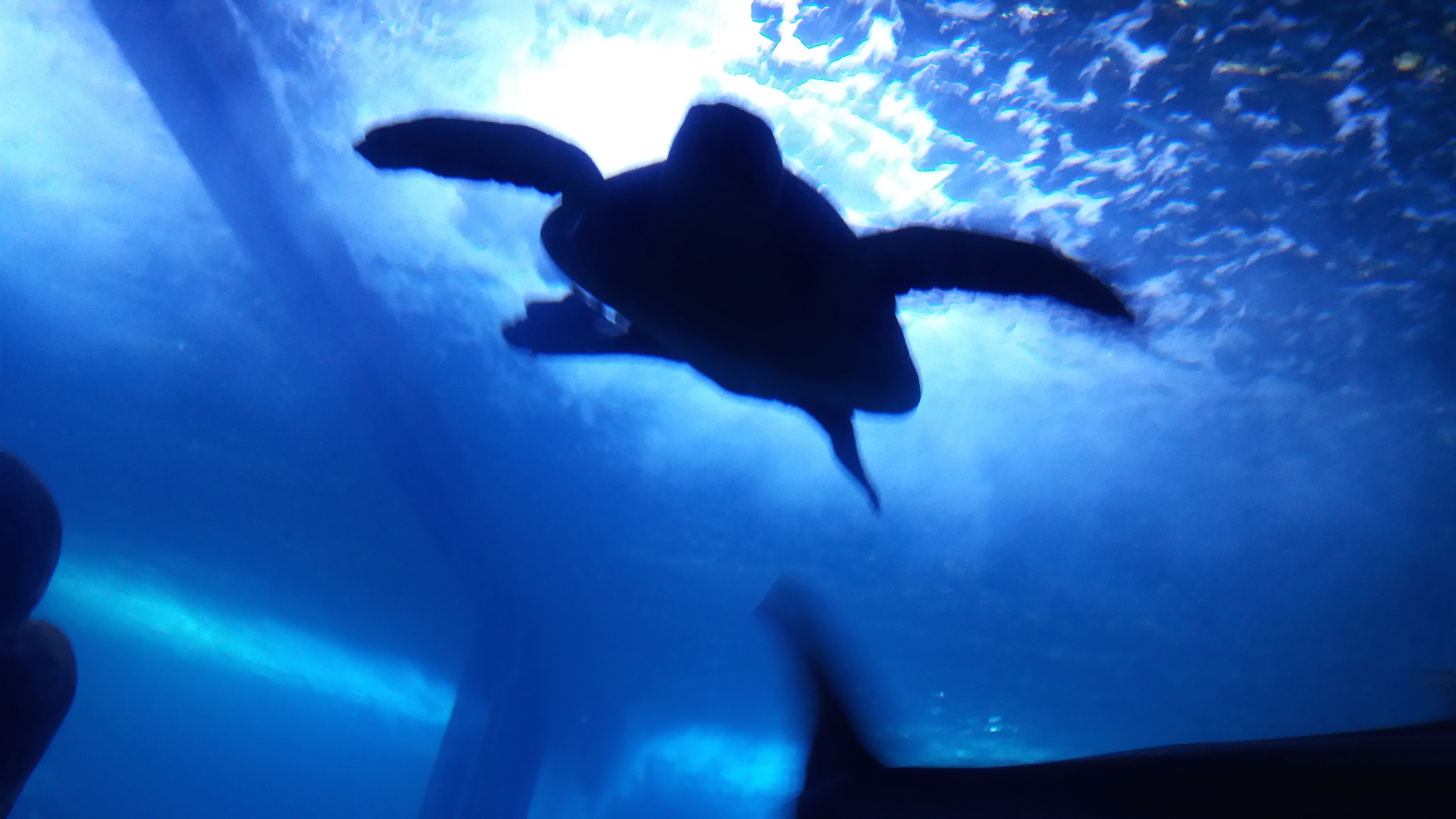 acquario cala gonone tartaruga