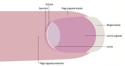Cuticole secche   rimedi naturali per curarle efficacemente cc7874464a8